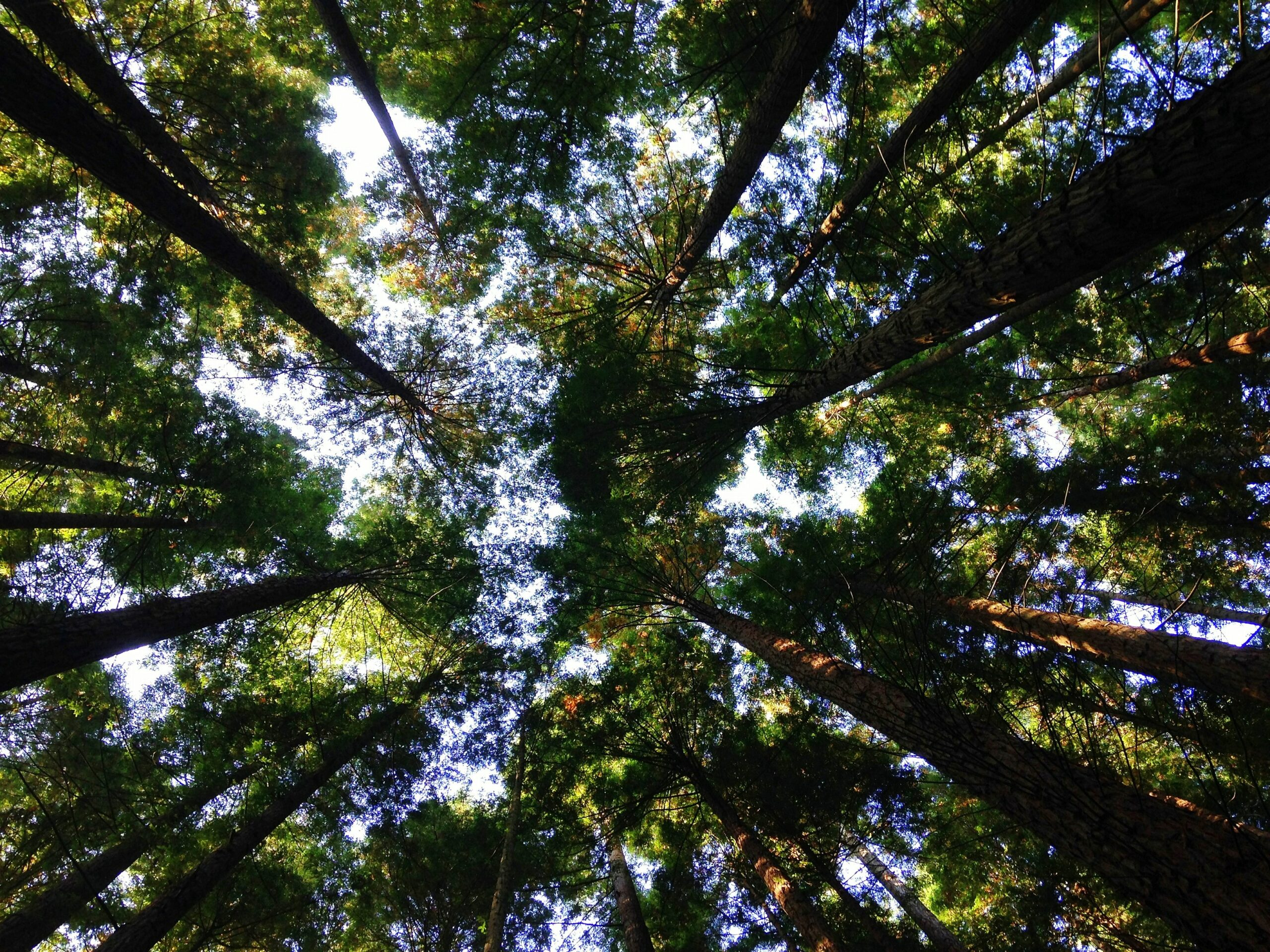 Six Key Ingredients to Accelerating Global Ecosystems